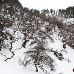 雪の季節になると恋しくなるしだれ栗森林公園がとてもフォトジェニックな件について