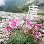 ロープウェイを使い八方池経由の唐松岳へ日帰り登山。鏡池や白馬三山の眺めやいかに?