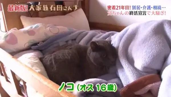 f:id:karuhaito:20170610145709j:plain