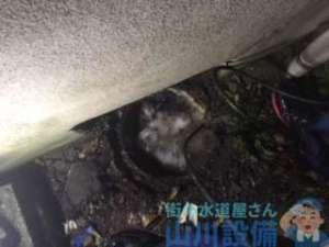 大阪府大阪市生野区  トイレつまり修理  排水管つまり修理  高圧洗浄機