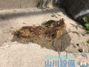 八尾市南亀井町で排水桝の根っ子除去は山川設備にお任せ下さい。