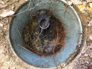 生駒市白庭台でトイレの排水桝に木の根っ子が侵入したら山川設備にお任せ下さい。