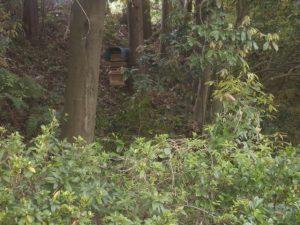 ニホンミツバチ捕獲巣箱