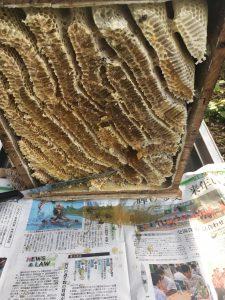 ニホンミツバチの重箱式巣箱