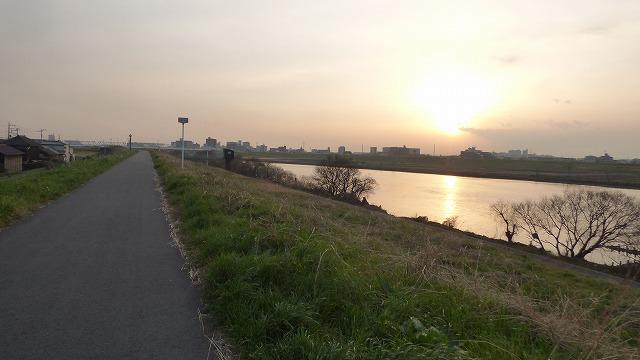 160308Tue 菜の花 江戸川 我が家の散歩道 (2)