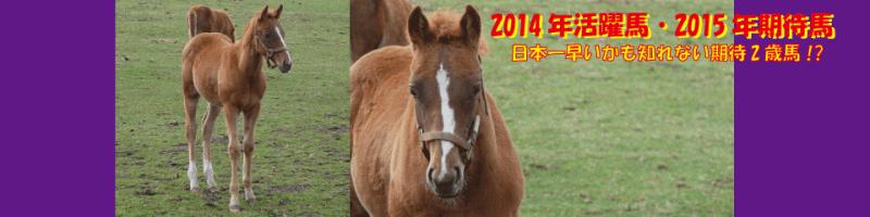 2014年活躍馬・2015年期待馬
