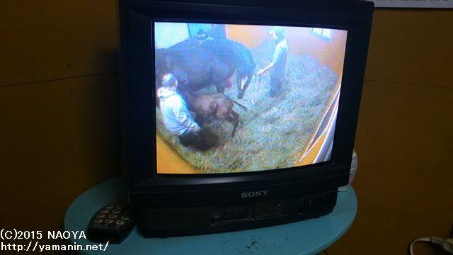 泊津で見守るカメラ