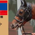 2016年7勝目・ヤマニンバステト