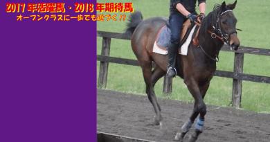 2017年活躍馬・2018年期待馬