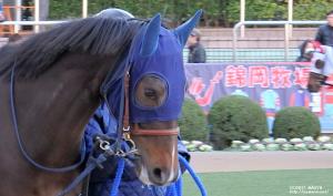 3歳新馬のヤマニンキアラ