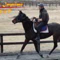 マリーンカップ(Jpn3)・ヤマニンアンプリメ