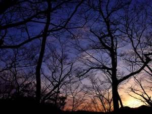 日の出は山の向こうだけど、ブナ林がきれい