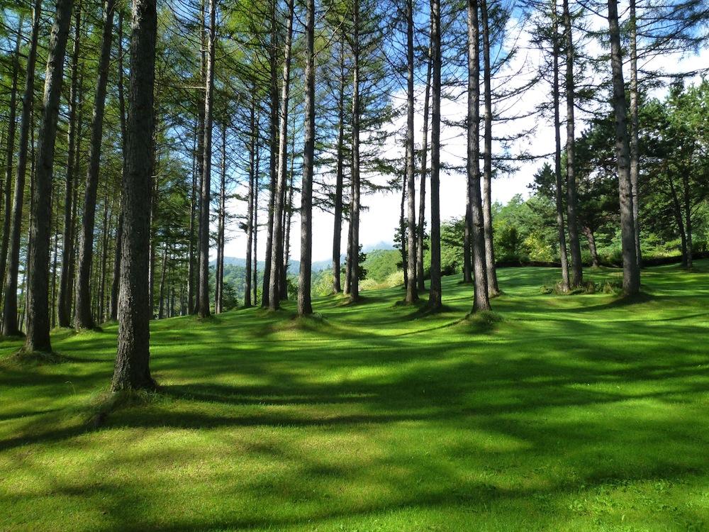 日本にある森の種類について