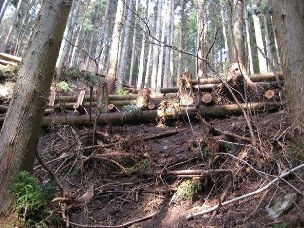 森林作業道作設#2( 根株を用いた路肩補強を丸太組工で実施 )| やまさ育林