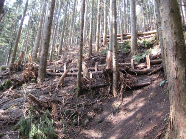 森林作業道作設#3( 急傾斜地における丸太組工 )| やまさ育林