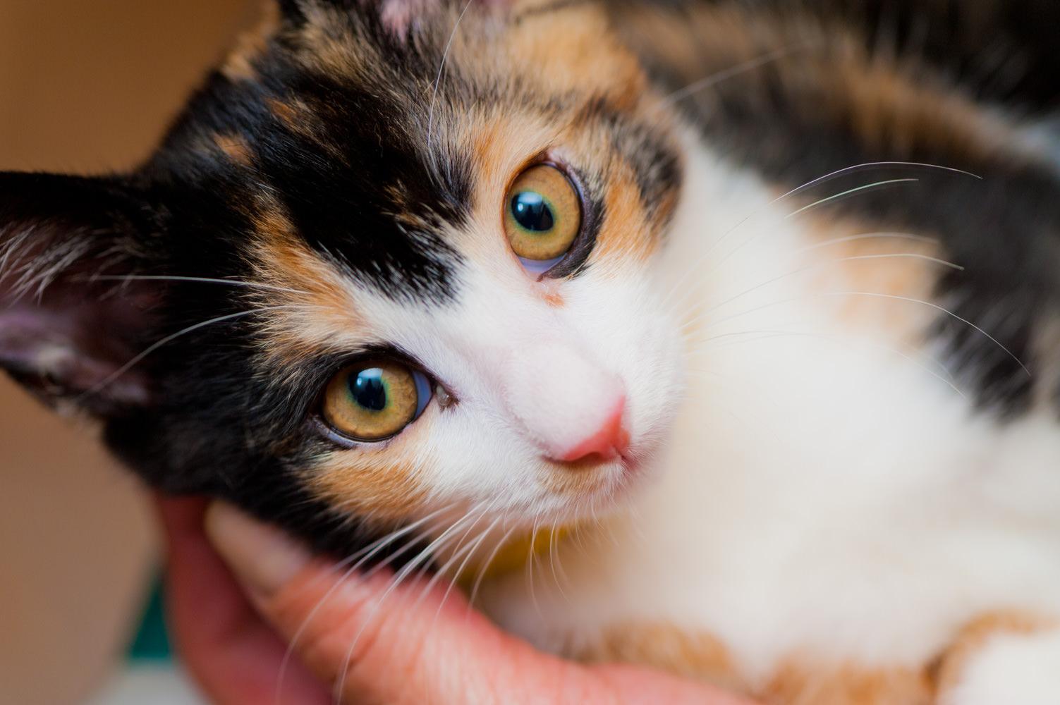マクロで猫を撮る