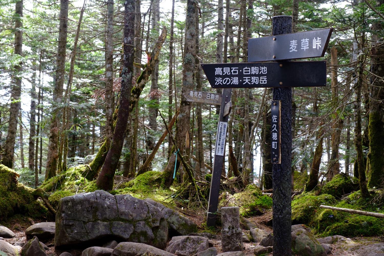 白駒の森の丸山