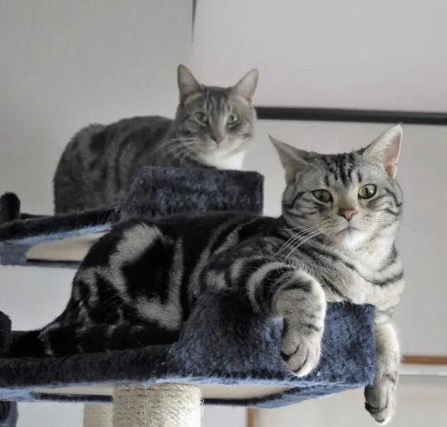 木下ゆうかは愛猫が実は嫌いだった?何匹飼っていて種類は?