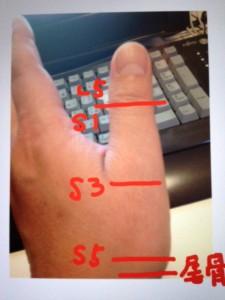 母指と仙骨の関係