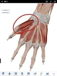 母指球筋群をほぐすと腰痛が緩和されます。