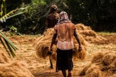 Transport des fibres de coco