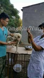 vet with Yang 2