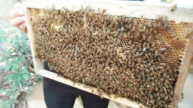 Vietnam, Lebah dan Madu