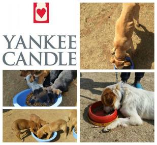 Yankee Candle South Africa - Monthly Donations