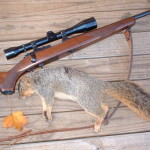 Fox Squirrel .22