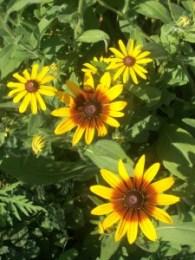 Pollinator Habitat 3 Year 2 Conservation Yankton Benedictines Sacred Heart Monastery Sisters Nuns