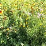 Pollinator Habitat 8 Year 2 Conservation Yankton Benedictines Sacred Heart Monastery Sisters Nuns