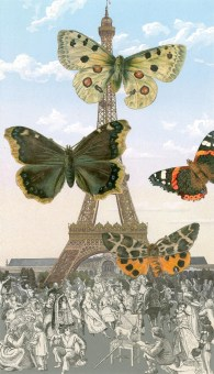 Papillon 68