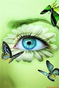 Papillon 48
