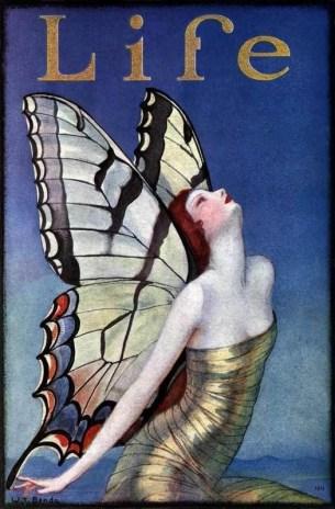 Papillon 34