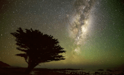 Tree Under the Stars by Mark Gee