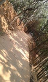 taman hutan kota 2 part7 (Copy)