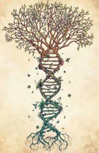 Невидимите влияния на родословното дърво върху характера и съдбата на нашите деца @ студио Янтра