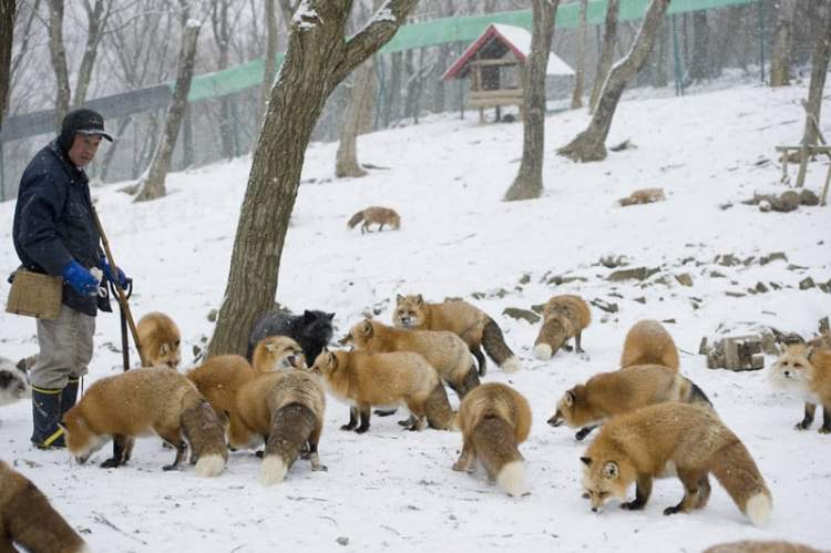 fox village japan