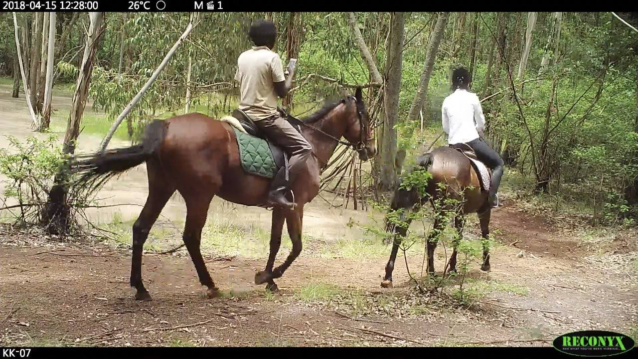 New Muthaiga Horse Riding Stables | Y'App Totos