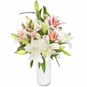 Pink-and-White-lilies