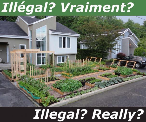 illegal-front-yard-garden