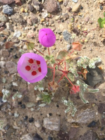cars & flowers 091
