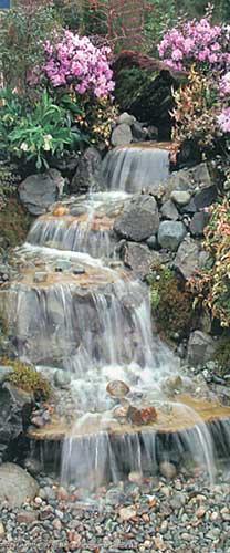 Fish Pond Plants Sale