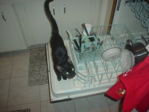 This is me learning about the dishwasher.