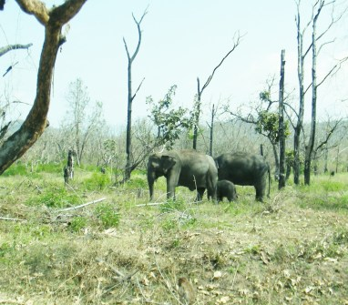 Through Bandipur jungle