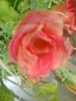 photo0608