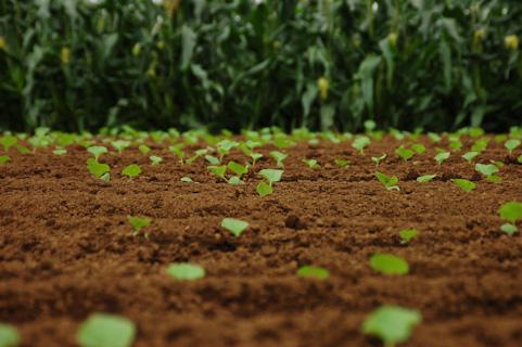 野菜の作り方 有機肥料と化学肥料の使い分け
