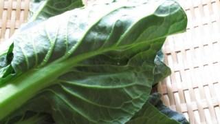 野菜の作り方 コマツナの作り方