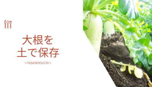 大根の保存 土に埋める方法や外の畑的農家的野菜の保存