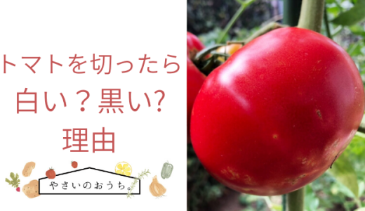 トマトを切ったら白い?黒いの理由
